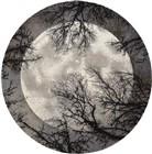 Nourison Twilight Moon Area Rug